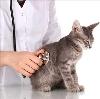 Ветеринарные клиники в Трехгорном